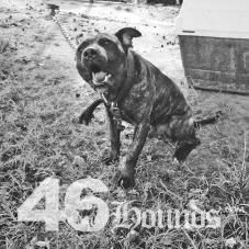 46hounds-goodboy2