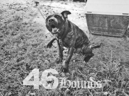 46hounds-goodboy2