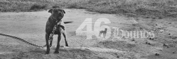 46hounds-goodboyheader